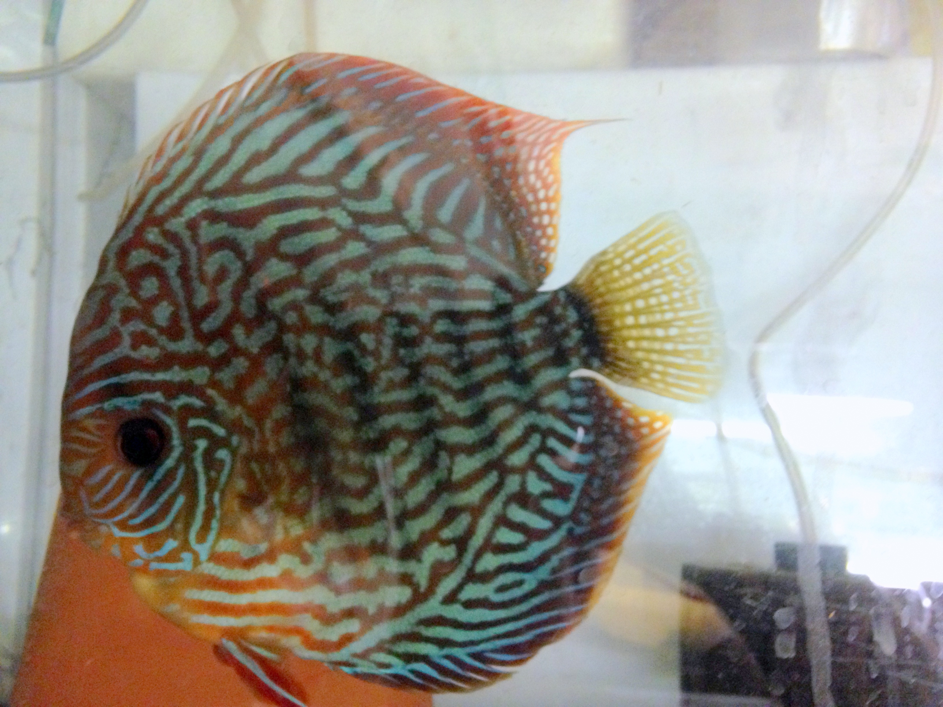 Fish aquarium utah -  Aquarium Society Can Anyone Help Me Figure Out How To Tag It So People Can Search Gslas And Have It Come Up Like The Site And Post Fish Stuff And